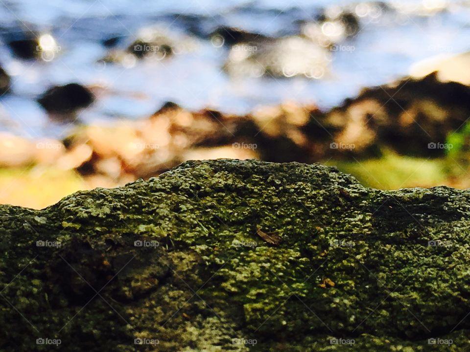 Close up mossy rock