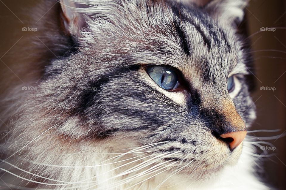 Close-up of a cat