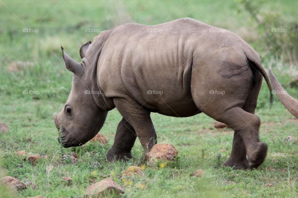 Stop killing our rhinos