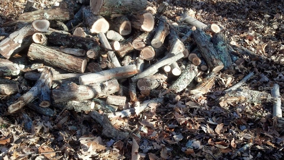Woodpile. During a recent storm, a large tree fell in the forest...so we made firewood :)