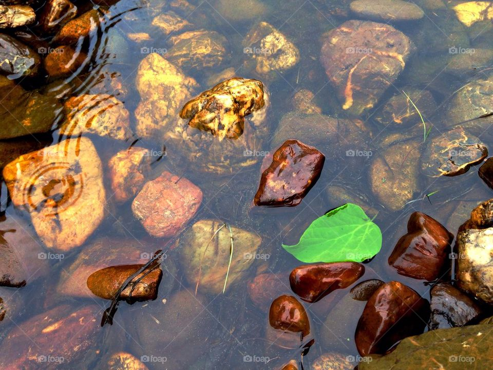 Leaf in water | zen, meditation, rain drops, vivid