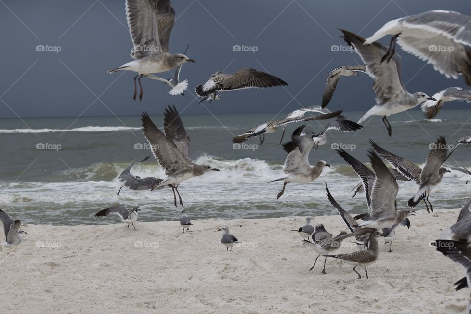 Flock of seagulls on the beach flying