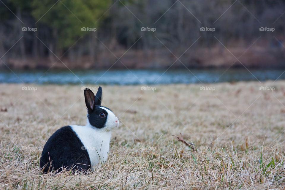 Black and white rabbit sitting on grass