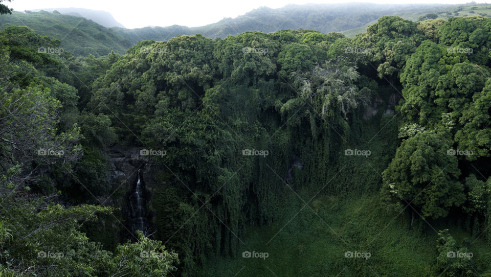 The breathtaking view along a hike on the Road to Hana in Maui. The jungle-esque view also features a beautiful waterfall!