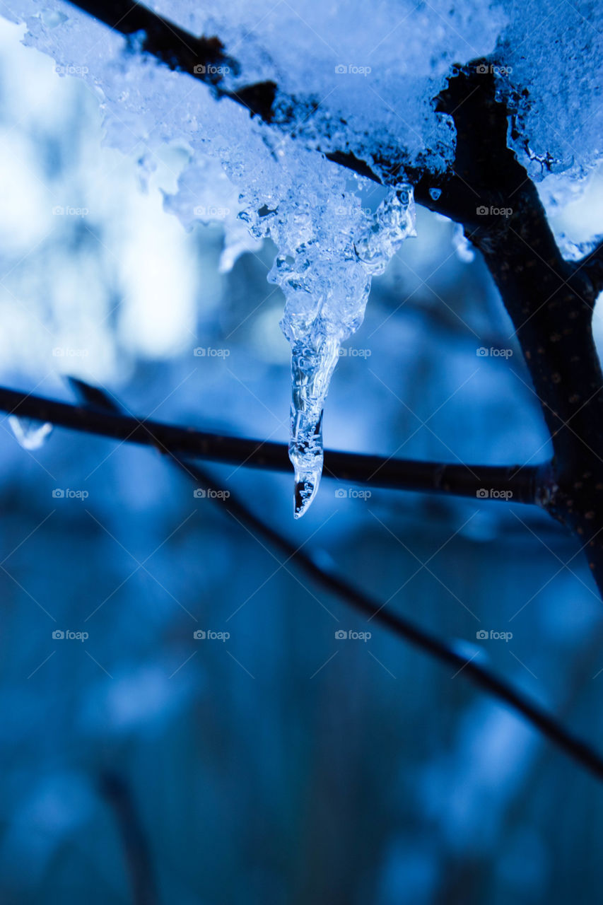 icicle shimmering on the birch tree branch on a cold November day