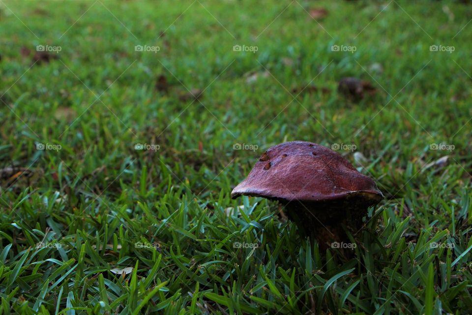 lonely red mushroom