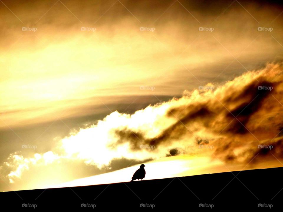 bird posing in the sunset. bird on the roof  posing in the light of sunset