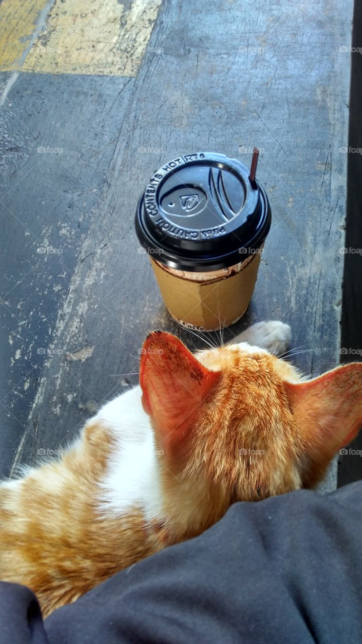 cat and a cup of hot coffee