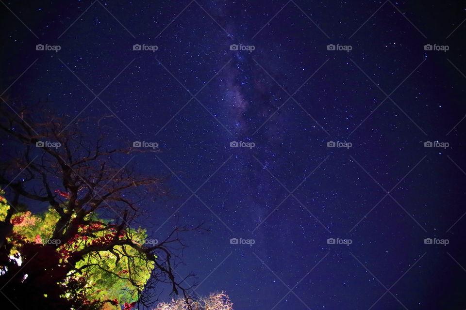 Mentigi Bay starry sky