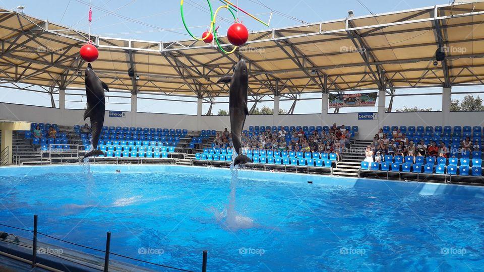 дельфин в прыжке за мечом