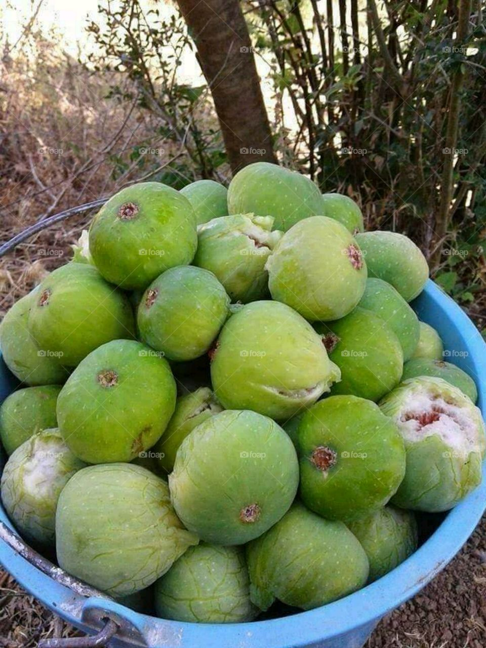 Moroccan Figs