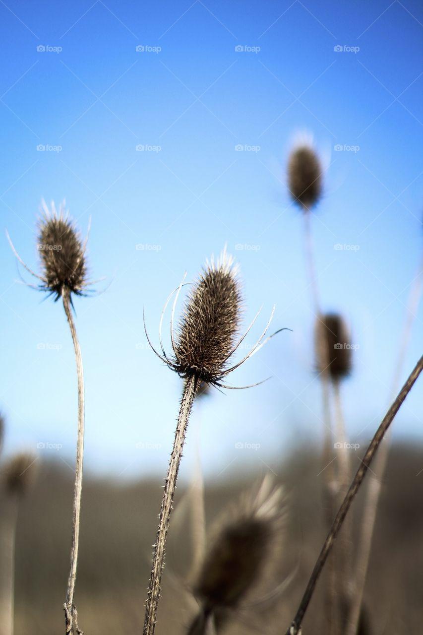 Weeds reaching