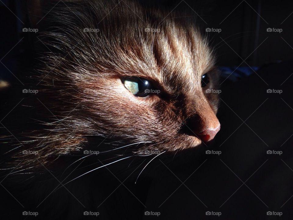 A closeup on a cat