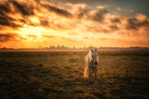 White horse against dramatic sky