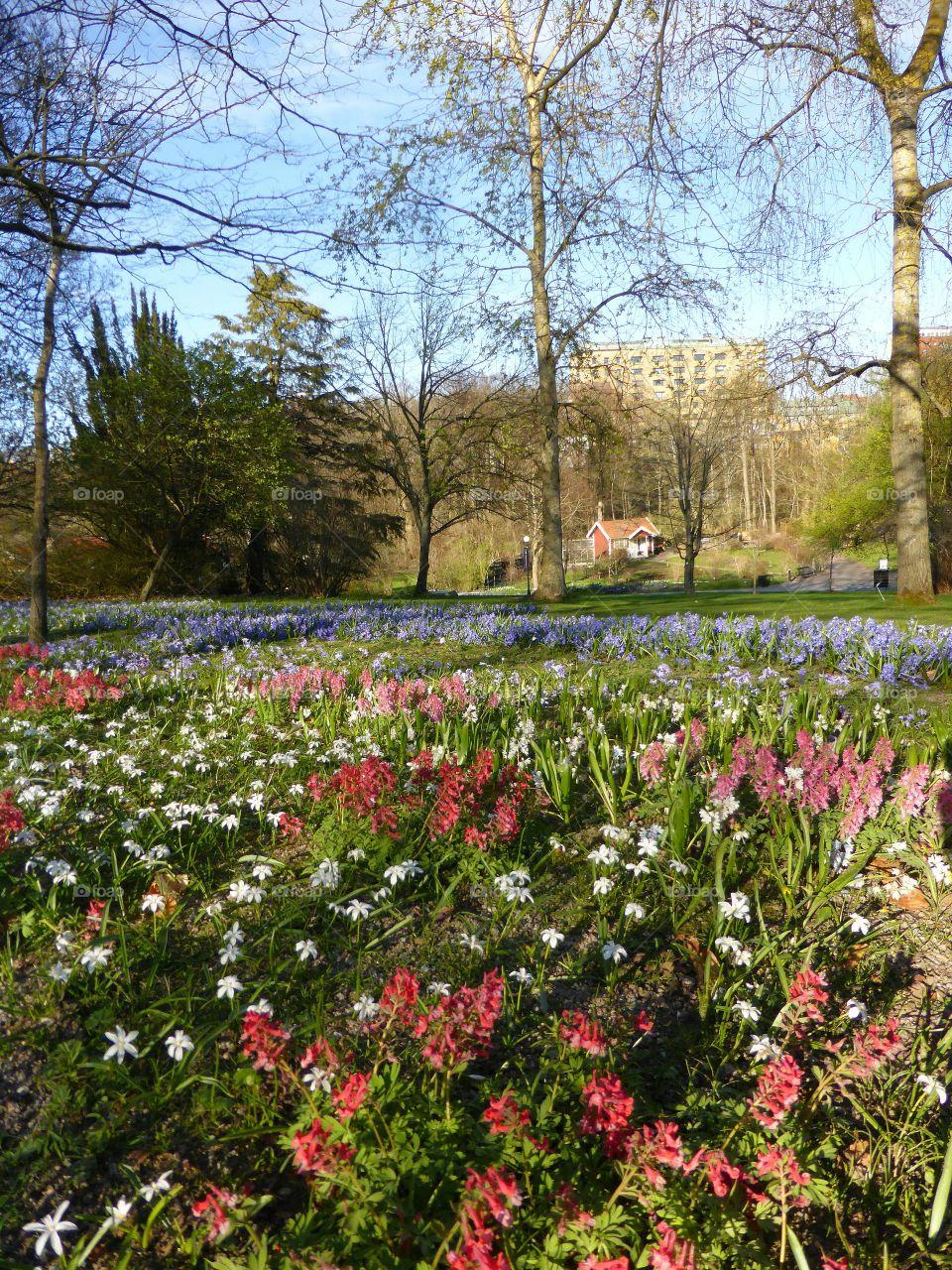 Spring flowers in the botanic garden in Gothenburg