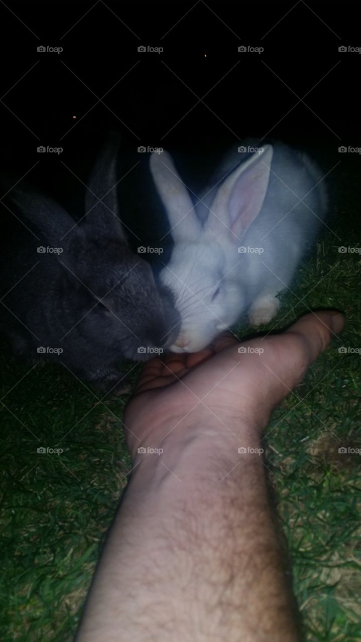Our new bunny friends. we stayed very still with food in her hand. it took some time for the bunnies not be scared of us and after a while we became friends. we first met them at Mission Hills Park in Henderson Nevada