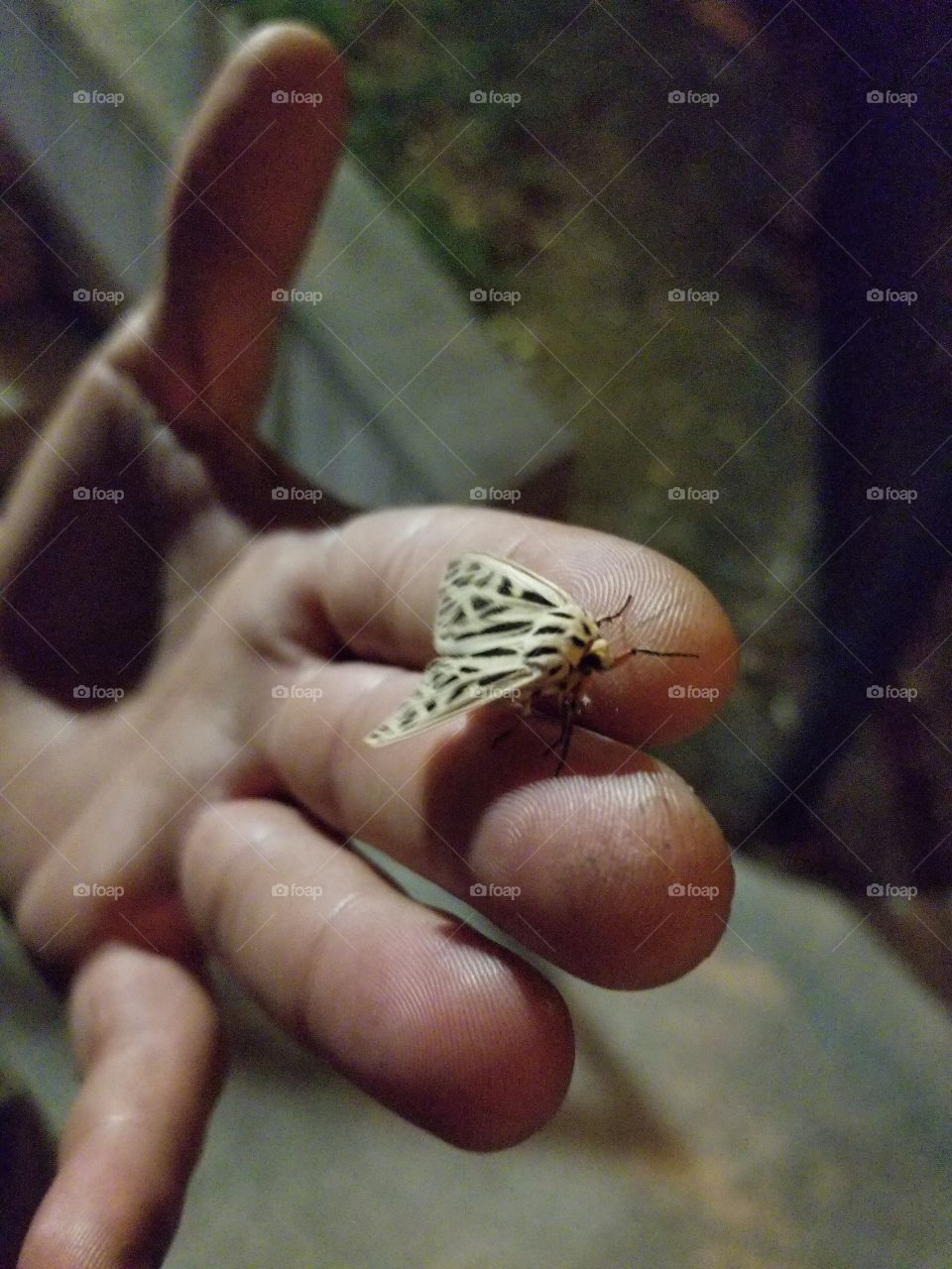 Moth on hand