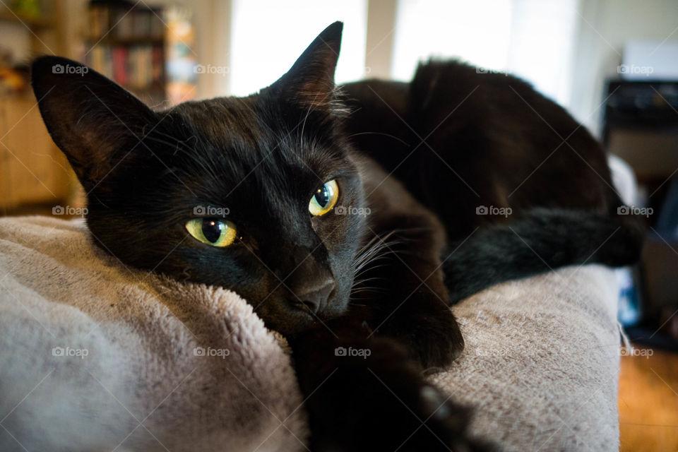 Black cat resting on bed
