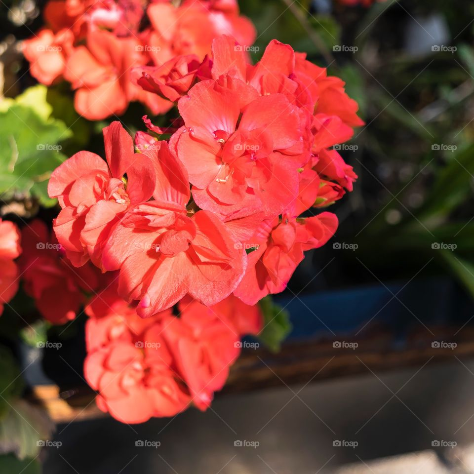 Amazing red flowers