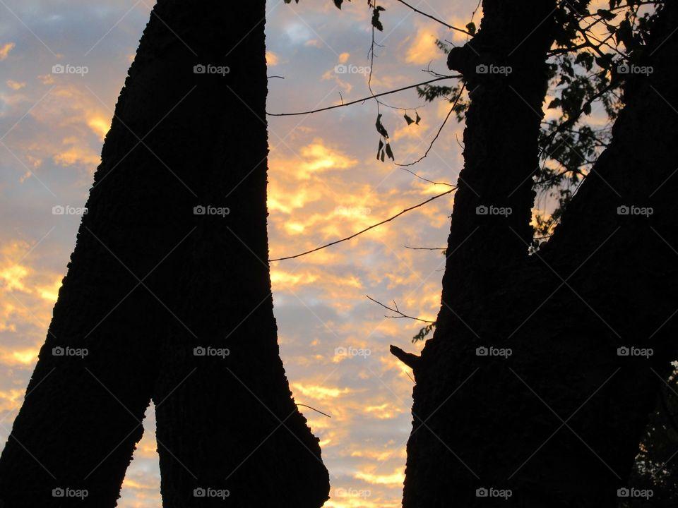 dark tree trunks