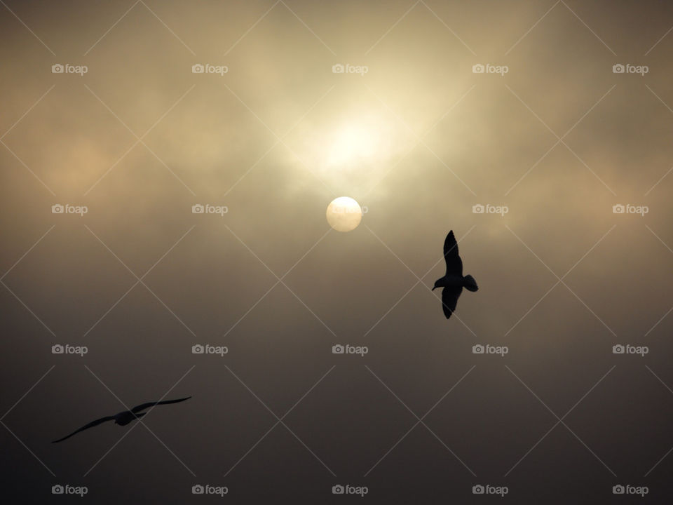 newburgh ny clouds birds sunrise by delvec