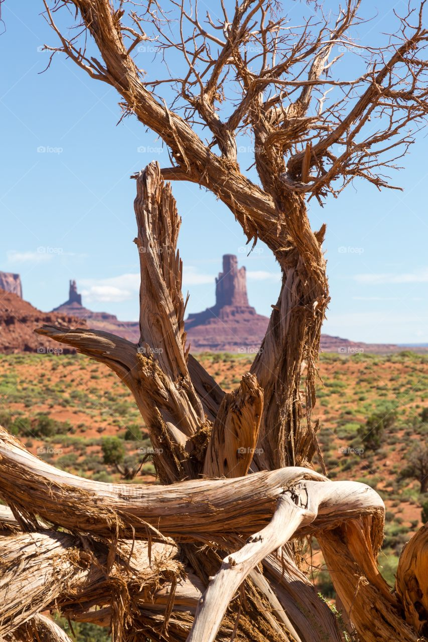 Monument valley view . Sandstone butte photographed through old dead tree roots. Monument valley scenery. Red buttes. Dry and dead tree trunk