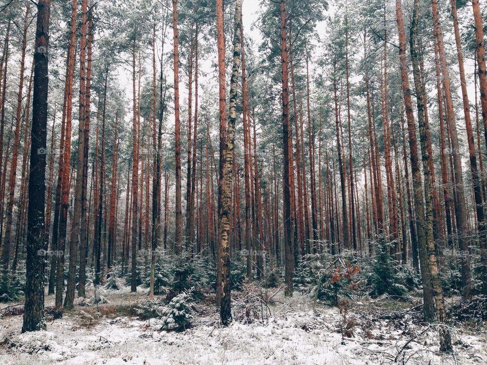 Winter Formation I
