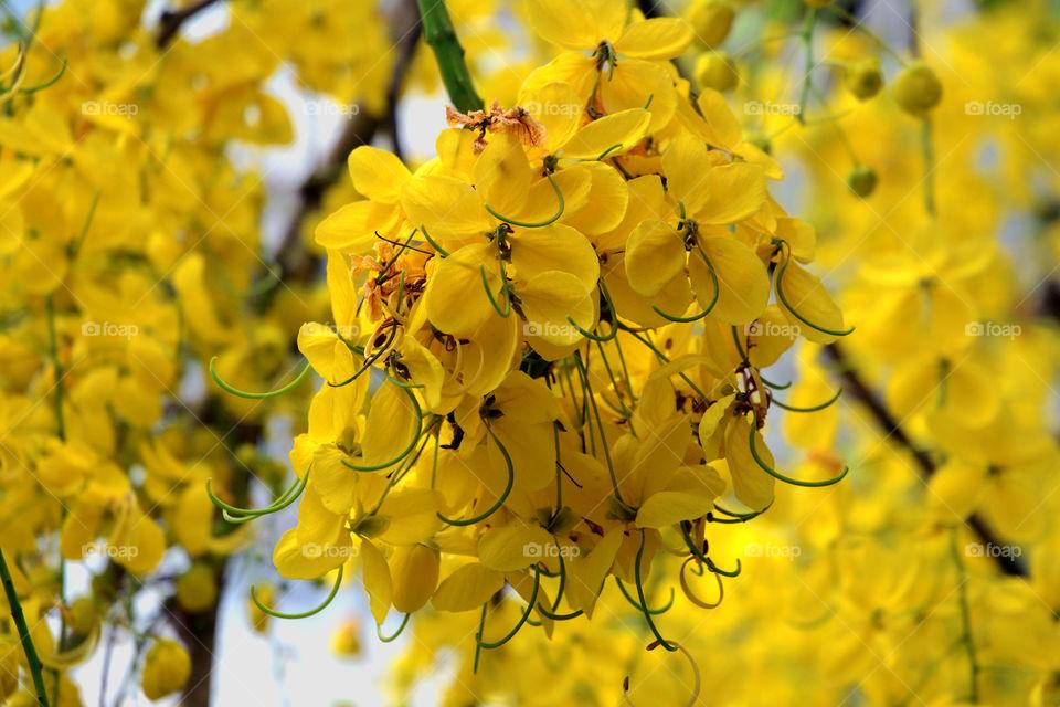 Seasonal flowers