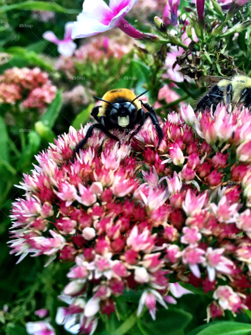 View of bee on beautiful flower