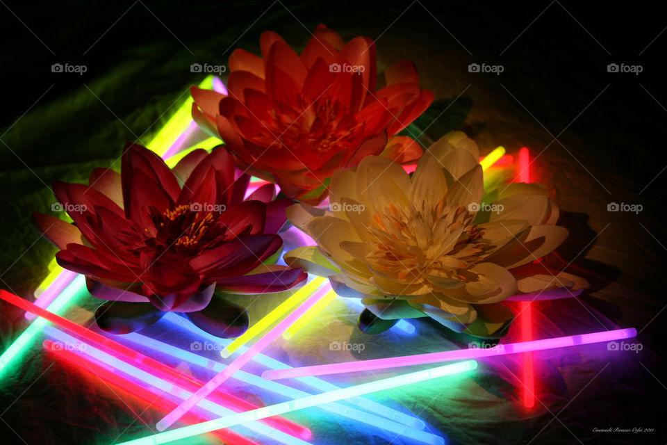 Koga immagini di luce