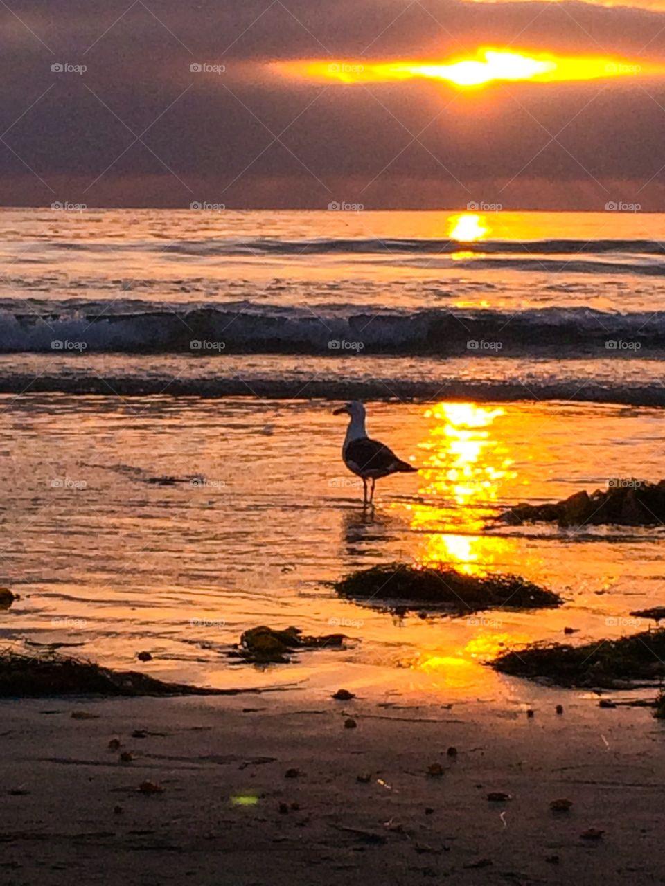 Seagull Sunset