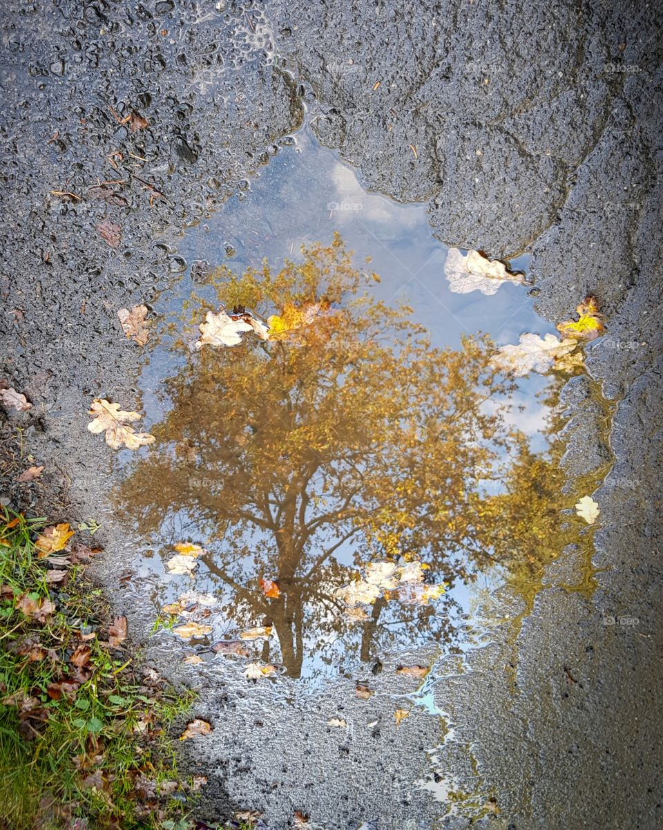 Autumn Tree mirror in puddle