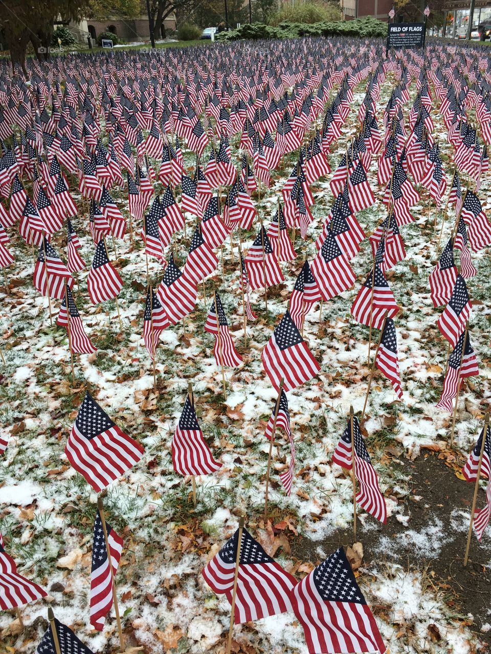 Field of flags in the snow