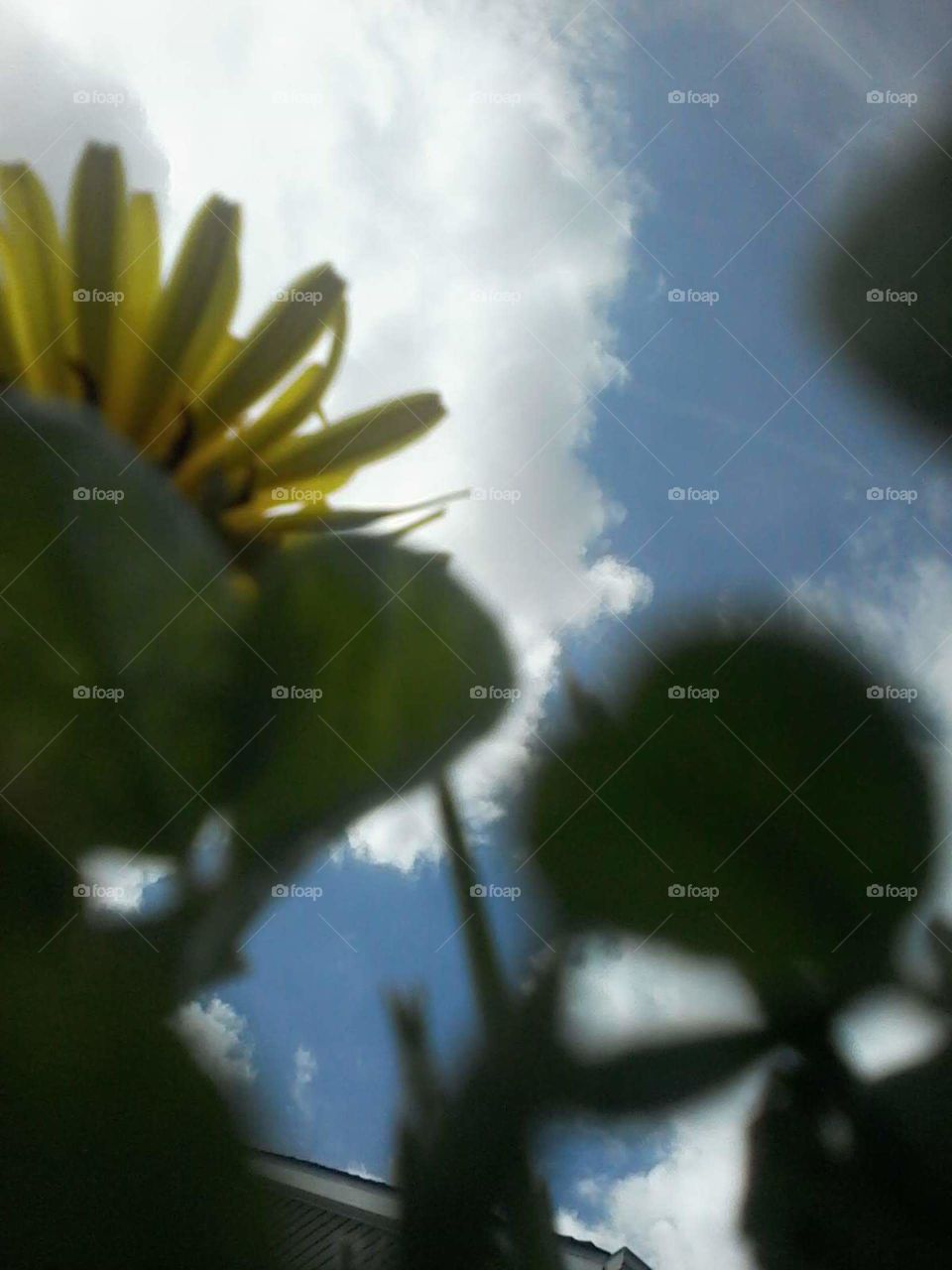 view of the sky from under the dandelions