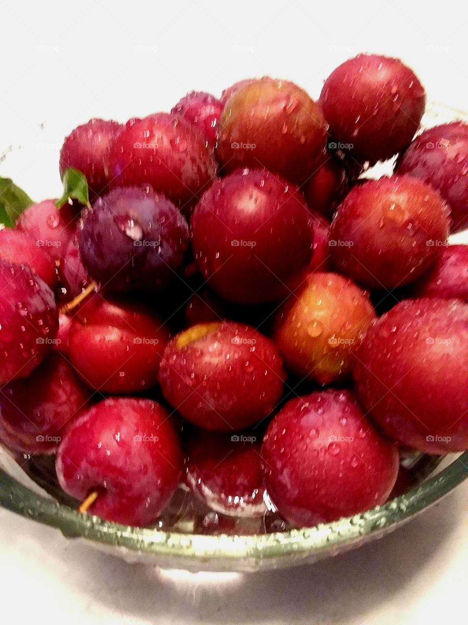 the squirrels didnt eat the plums before I could get them.  YEA!