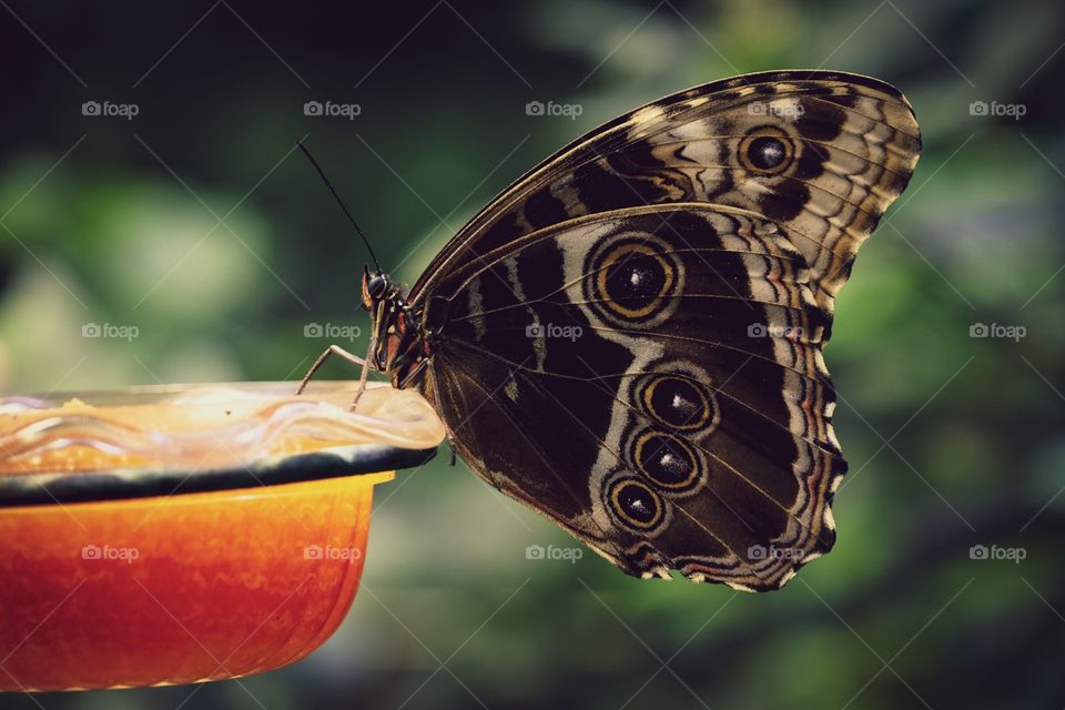 Butterfly Feeding Perched On Glass Feeder, Insect Photography, Closeup Macro Photo