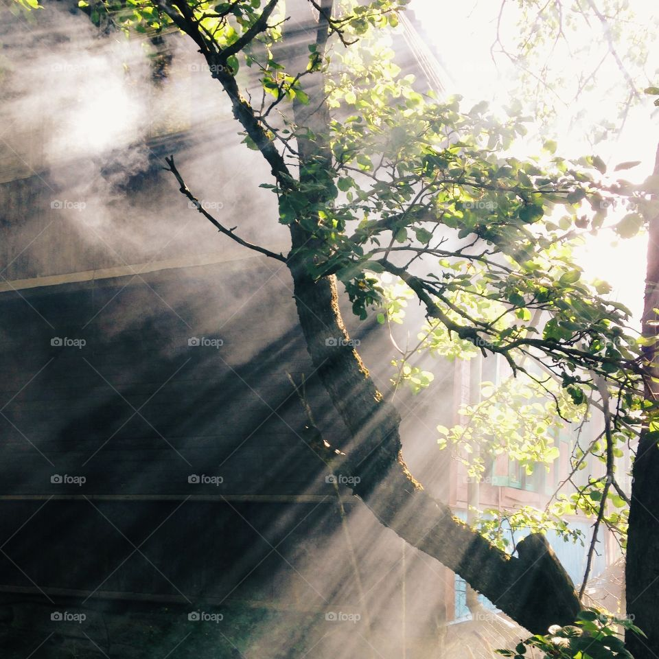 Sunbeam over the tree