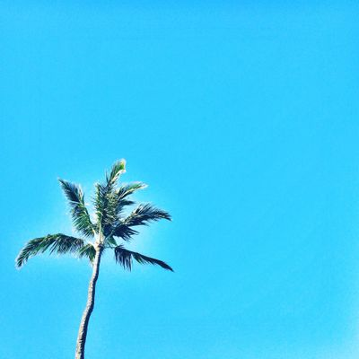 Beach, Palm, Sun, Sky, Tree