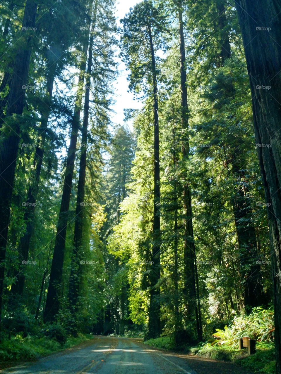 Humbolt Redwoods. August 2015
