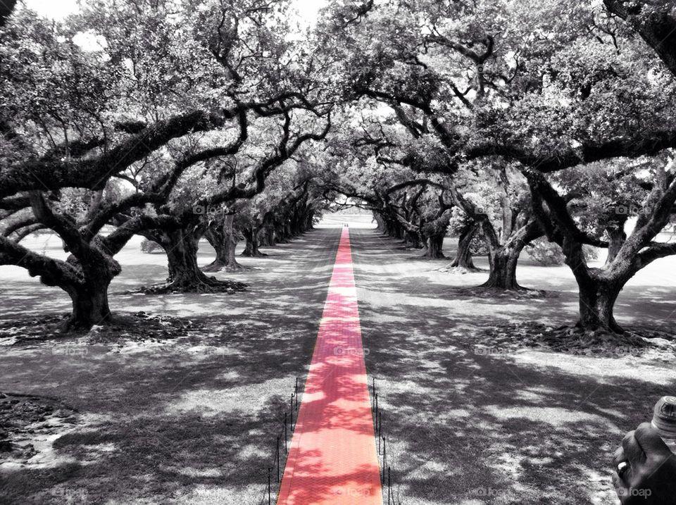 Oak Alley-Louisiana